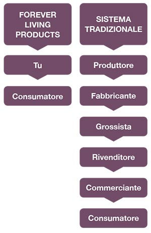 network-marketing-forever-living-sistema-distribuzione